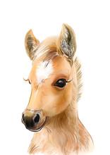Horse Print • Baby Animal Pr...