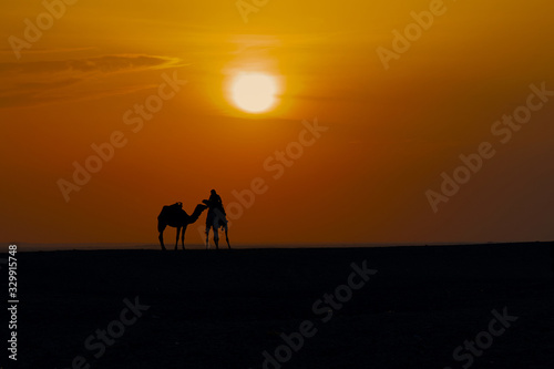 Camel driver with camels on the background of sunset in the Sahara contour Slika na platnu