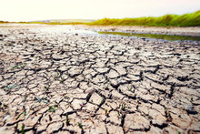 Dry Cracked Earth With A Dried...