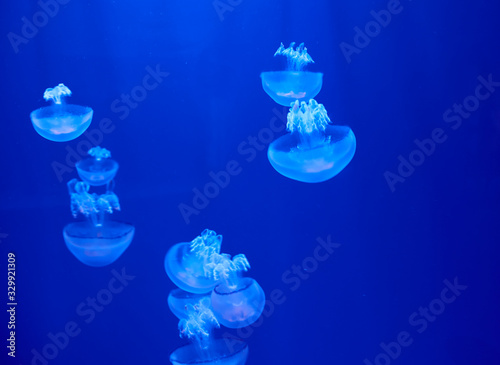 Valokuvatapetti Fluorescent jellyfish on blue background, the ocean