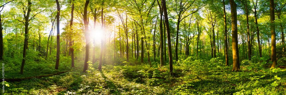 Fototapeta Wald im Frühling mit heller Sonne, die durch die Bäume strahlt