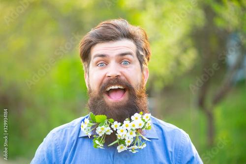 Fototapeta Blossom beard. Funny head portrait of a bearded man looking at the camera over spring blossom background. obraz