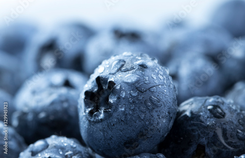 Fototapeta blueberry berry health and diets close-up macro with fresh water drops obraz