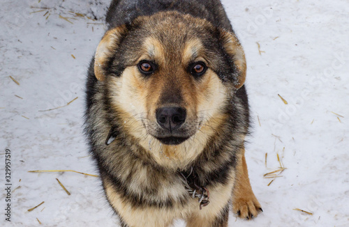 Cute portrait of a black and brown country dog Fototapete
