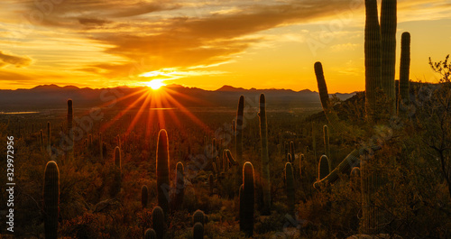 Desert Sunset in Tucson Arizona Canvas Print