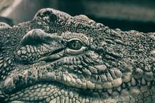 Zoo Neal Crocodile Evil Eye