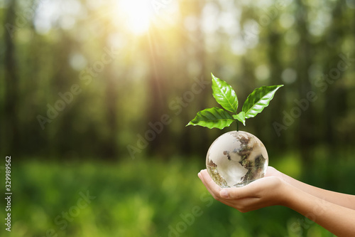 Obraz hand holding globe glass and tree growing. environment eco day concept - fototapety do salonu