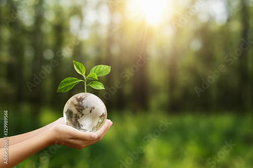 hand holding globe glass and tree growing green nature background. environment eco day concept