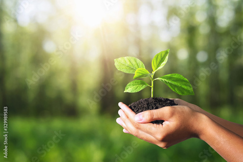 plant growing in hand on green nature with sunlight background. eco environment concept
