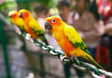 Portrait Of A Parrot In The Park