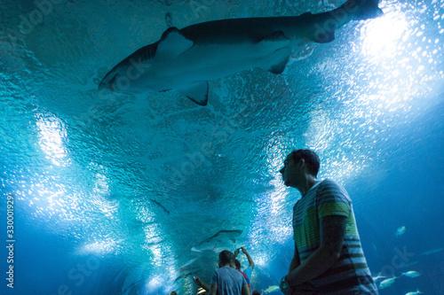 Fotografía Man At Aquarium