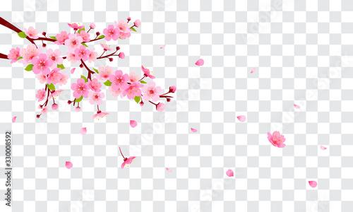Obraz na plátně Spring Sakura branch with falling petals Vector illustration