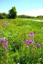 Bunte Wiese Mit Wildblumen
