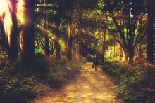 Person Walking On Dirt Road In Forest