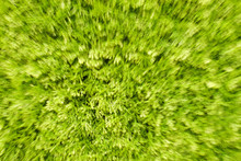 Grass In Bloom With A Zoom Warp Lens Motion Distortion And Blur Effect.