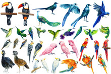 Watercolor Tropical Birds, Toucan, Macaw, Parrot, Cockatoo, Kookaburra, Hummingbird, White Isolated Background, Hand Drawing