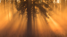 Forest Landscape With Sun Rays...