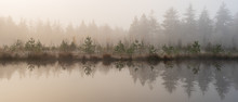 Beautiful Calm And Misty Fores...