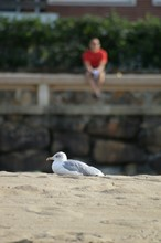 Close-up Of Seagull Sitting On...
