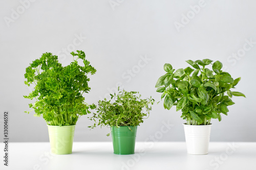 Obraz healthy eating, gardening and herbs concept - green parsley, basil and thyme in pots on table - fototapety do salonu