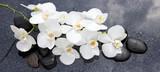 Fototapeta Kuchnia - White orchid and black stones close up.