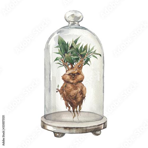 Carta da parati Mandrake ans glass dome