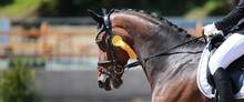 Dressage Horse In Portraits From The Head With A Golden Bow On The Lap Of Honor..