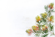Australian Native Grevillea Foliage With Yellow And Orange Flowers, On A Rustic White Wooden Background Photographed From Above. Space For Copy.