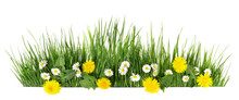Spring Grass With Daisy And Da...