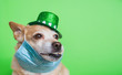 Cute dog in Leprechaun wearing protective face mask on a green background. March 17, happy st patricks day Coronavirus concept Pandemic quarantine