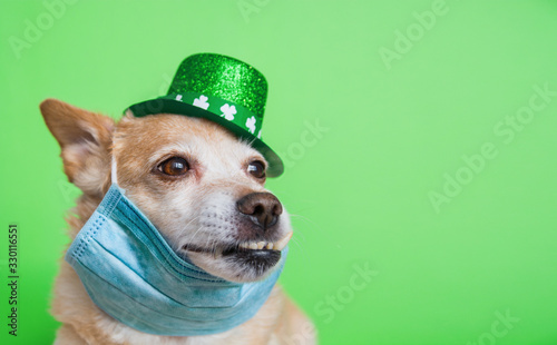 fototapeta na drzwi i meble Cute dog in Leprechaun wearing protective face mask on a green background. March 17, happy st patricks day Coronavirus concept Pandemic quarantine