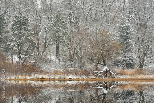 Fotografie, Obraz Winter landscape of snow flocked trees on the shoreline of Deep Lake and with mi