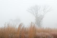 Frosted Autumn Tall Grass Prai...