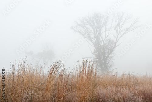 Frosted autumn tall grass prairie in fog, Fort Custer State Park, Michigan, USA Fototapeta