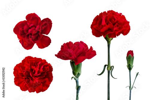 Obraz 花素材 赤いカーネーション - fototapety do salonu