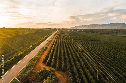 Photo Plantación de café al lado de una carretera