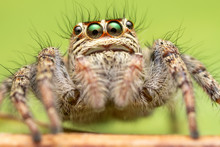 The Beautiful Eyes Of Spiders ...
