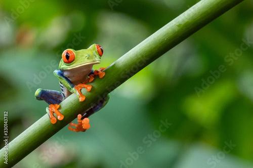 Obraz na plátne green frog