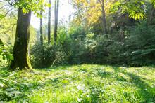 Sunny Green Grassy Meadow In T...