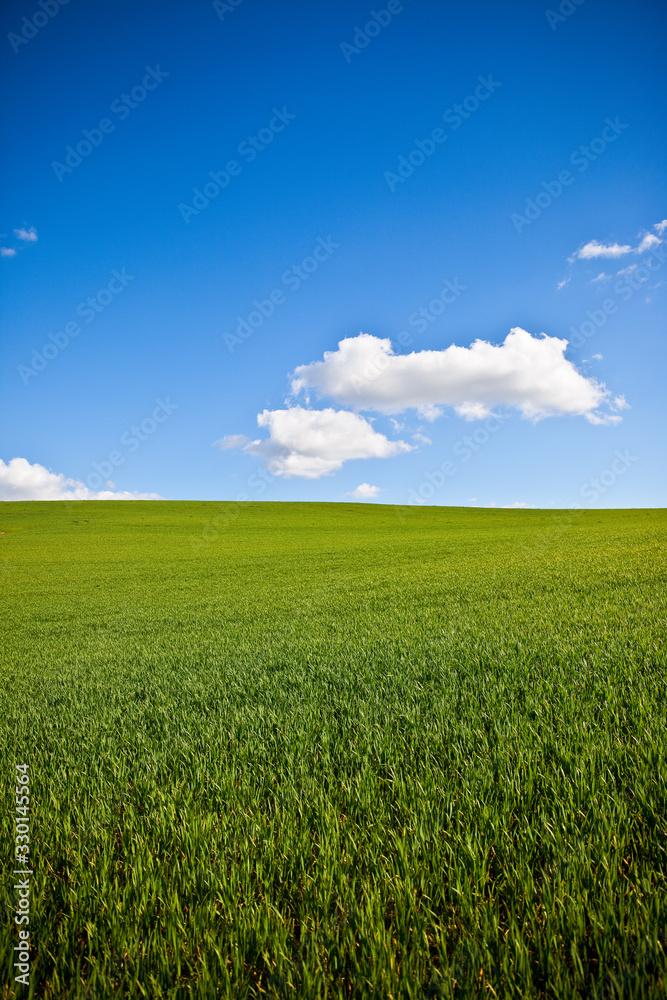 Fototapeta Champ d'herbe verte au printemps sous le soleil.