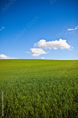 Obraz Champ d'herbe verte au printemps sous le soleil. - fototapety do salonu