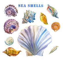Set Of Sea Shells, Watercolor ...