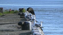 Seagulls Sitting On The Pier