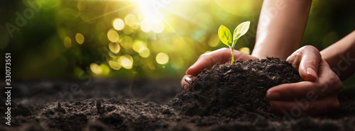 Plant in Hands. Ecology concept. Nature Background Canvas Print