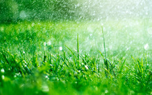 Grass With Rain Drops. Watering Lawn. Rain. Blurred Grass Background With Water Drops Closeup. Nature. Environment Concept