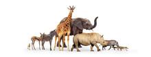 Baby Zoo Animals Walking Toget...