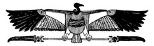 Vulture With Plumes From The C...