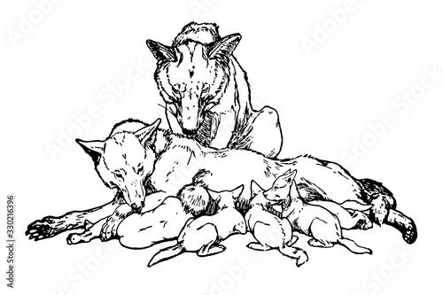 Fotomural Mowgli's Brothers, vintage illustration