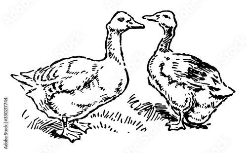 Stampa su Tela Goose and Gander, vintage illustration.