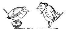 Edward Lear, Vintage Illustrat...